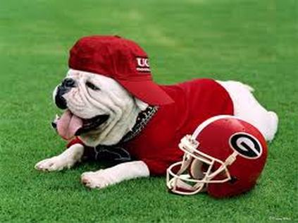 Georgia bulldogs georgia bulldogs